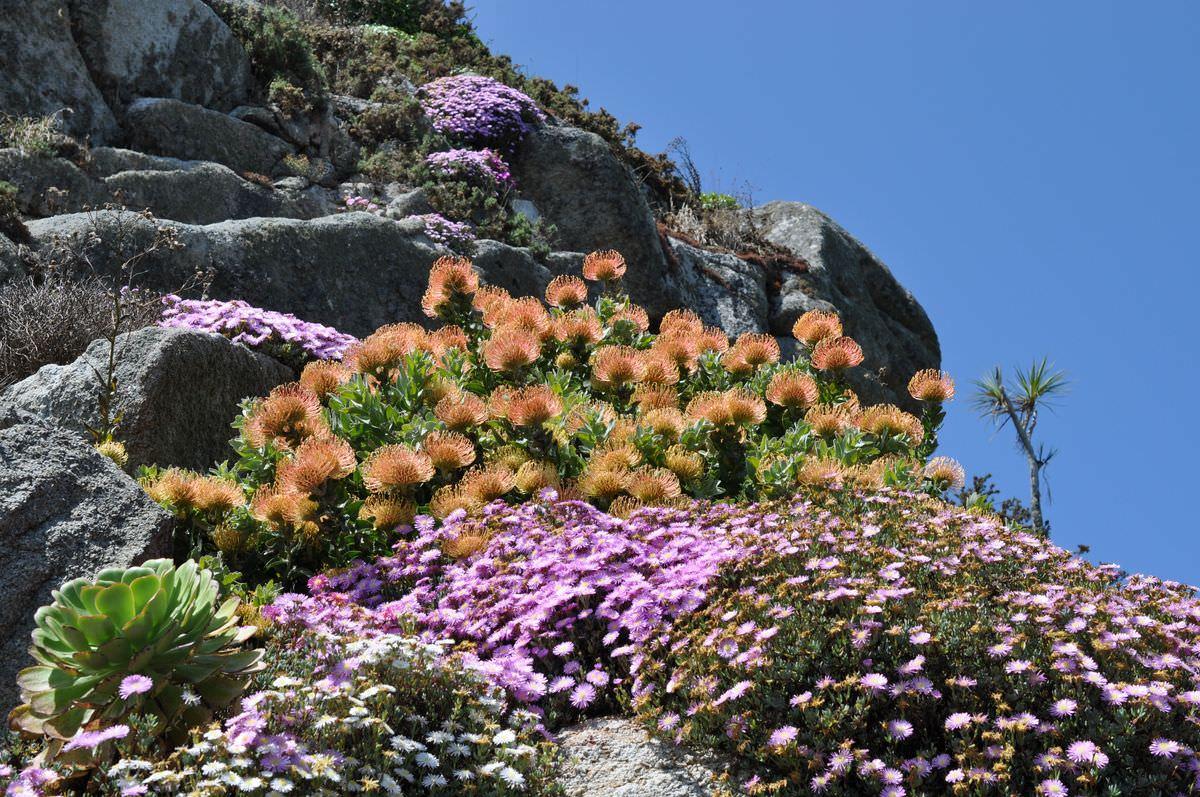 jardin-exotique-roscoff