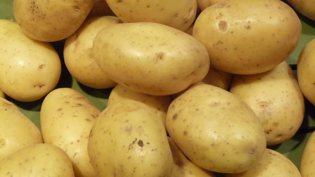 Pomme de terre - Roscoff