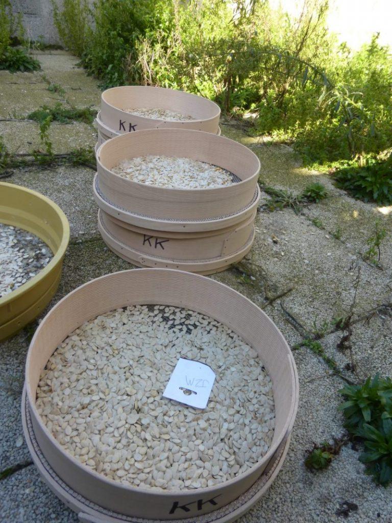 Maison des semences