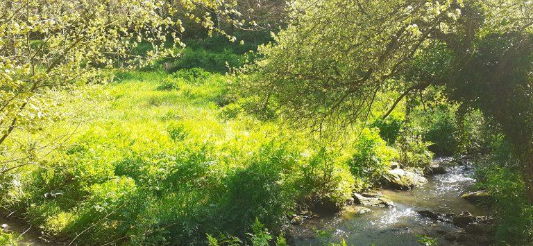 Plounevez Lochrist- vallée de pont d'arm-crédit ph P. Mellouet 27