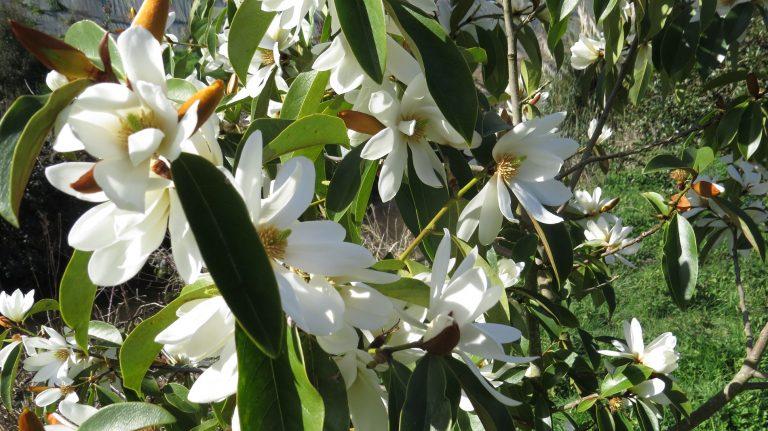 Sibiril- Parc botanique du moulin de Kérouzéré.crédit photo- P. Mellouet 3