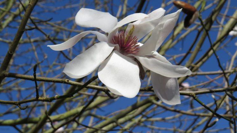 Sibiril- Parc botanique du moulin de Kérouzéré.crédit photo- P. Mellouet