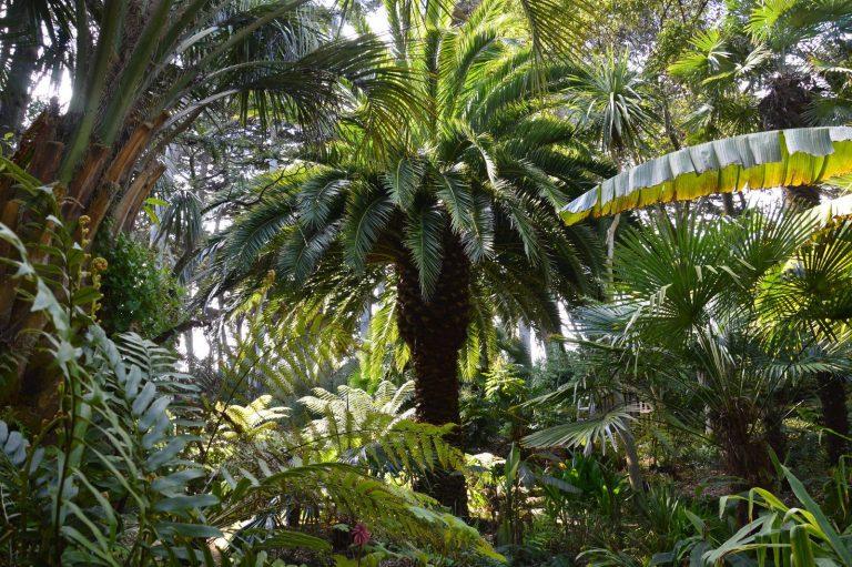 jardin-delaselle-batz-Palmeraie