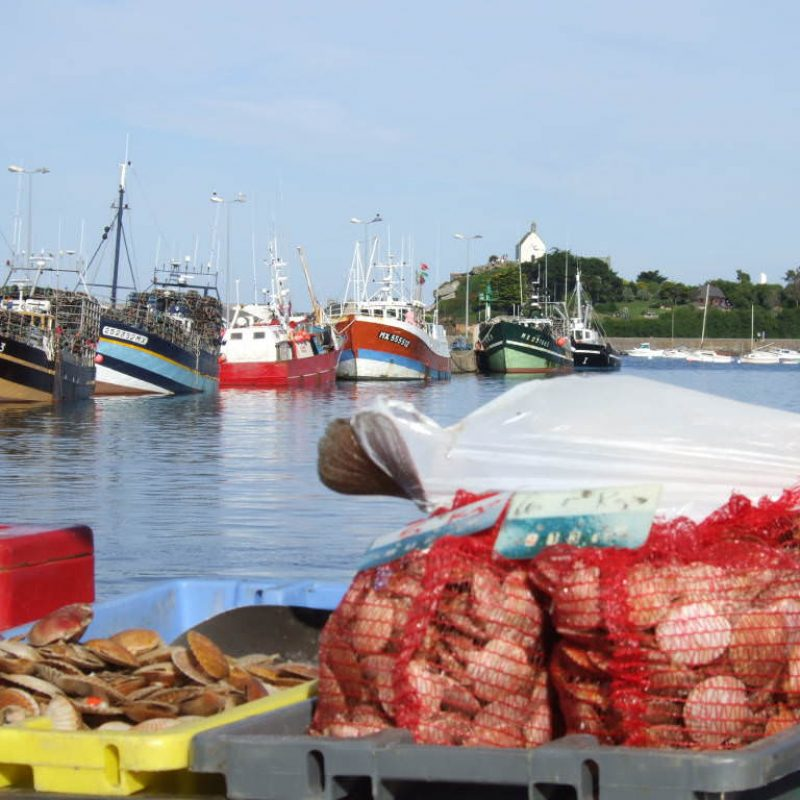 roscoff-fruits-de-mer-port